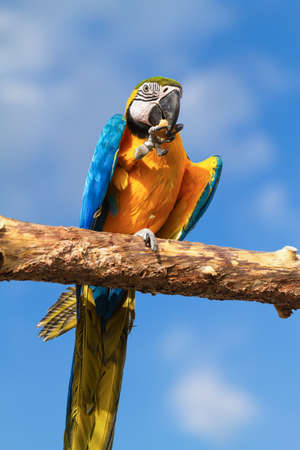 pound cake: Macaw eating pound cake.