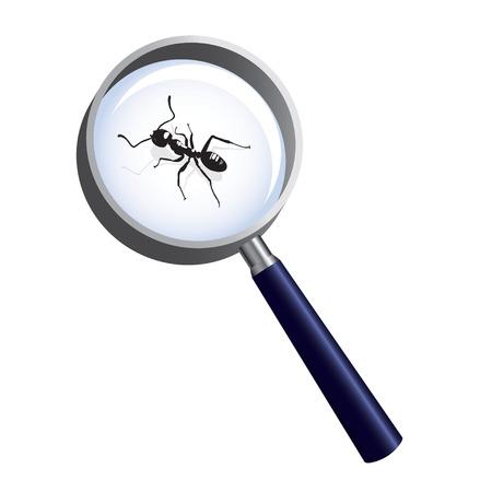 hormiga: Hormiga bajo la lupa