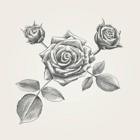 Dibujado a mano rosas Foto de archivo - 48297404