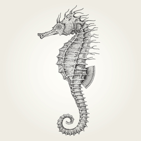 Hand drawn seahorse. Vintage vector illustration of marine fish Ilustração