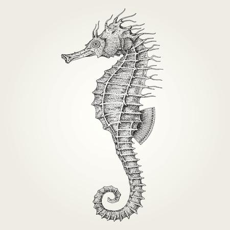 dragon swim: Hand drawn seahorse. Vintage vector illustration of marine fish Illustration