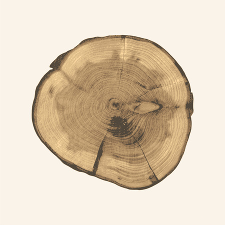 Cross section of a tree trunk and stump. Structure of wood. Round cut with annual rings Ilustração