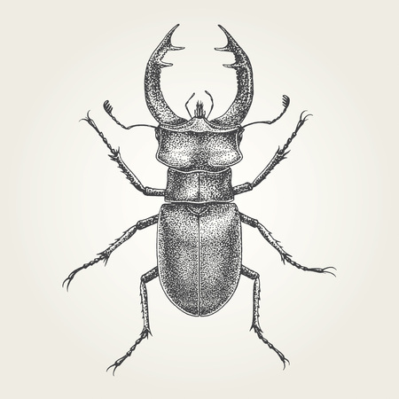 Hand drawn Stag vintage vector illustration  イラスト・ベクター素材