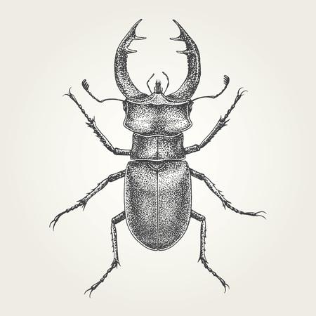 Hand drawn Stag vintage vector illustration 矢量图像