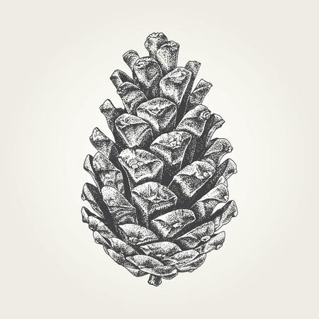 Hand drawn pine cone vintage vector illustration