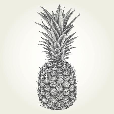 Hand drawn pineapple. Vintage engraved vector illustration