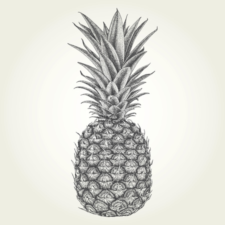 Hand drawn pineapple. Vintage engraved vector illustration 免版税图像 - 106579651