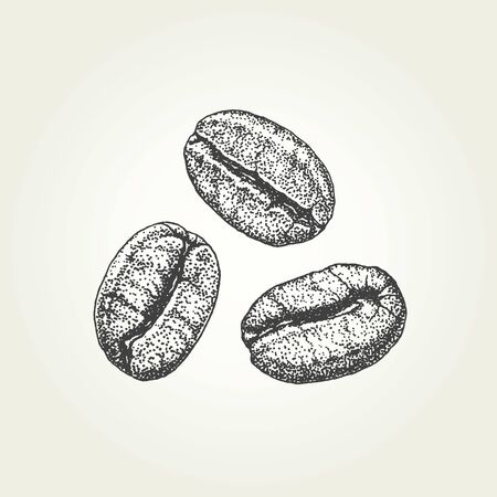 Hand drawn coffee beans. Vintage vector illustration 矢量图像