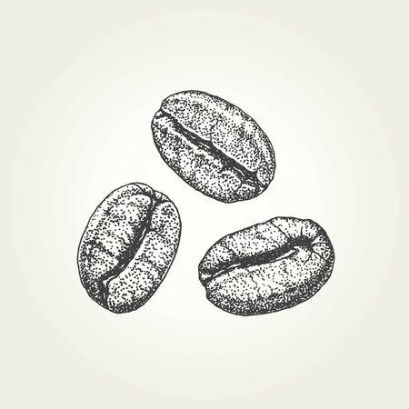 Hand drawn coffee beans. Vintage vector illustration Illustration