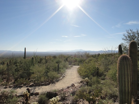 sun drenched: High Desert Stock Photo