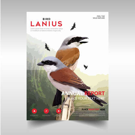 Poster design. Lanius Bird, with colorful bird background, with photorealistic vector image