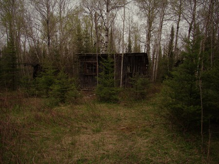 Abandoned cabin in the woods