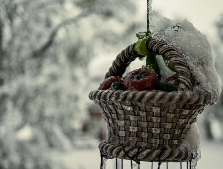 Frozen basket of apples on a wind chime