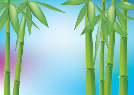 Bamboo forest, vector illustration Vector