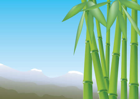 Bamboo, vector illustration Vector