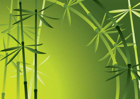 illustration of bamboo forest Vector