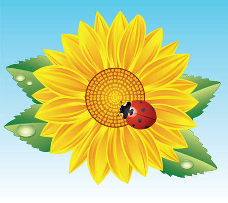 vector sunflower and ladybird Illustration