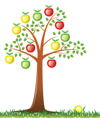 apple tree with fruits Vector