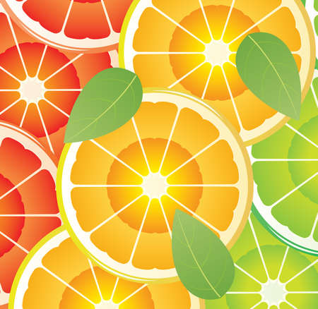 citrus slices of different colors Vector
