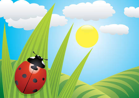 sunshine insect: vector ladybird on the leaf