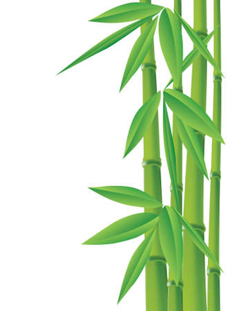 bamboo, vector illustration with copy space Vector