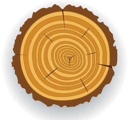 annual ring annual ring: wooden cut clip-art