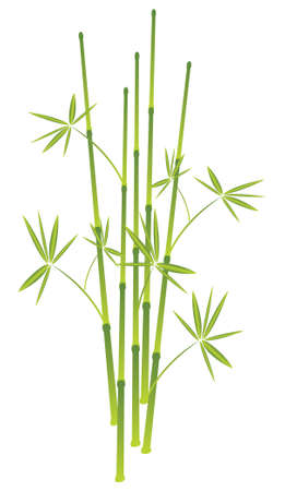 china wall: bamboo, illustration