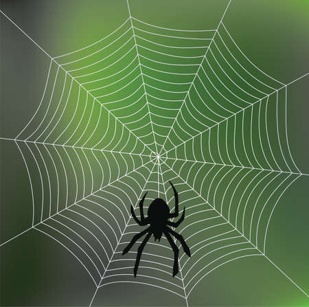 vector spider and web Vector