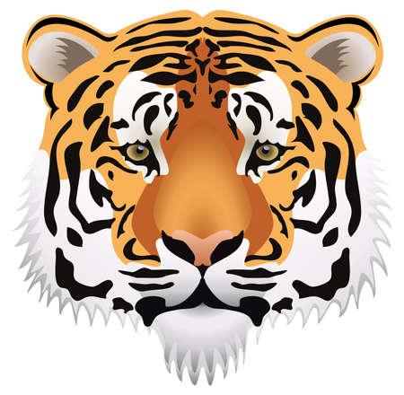 tiger head:  tiger head