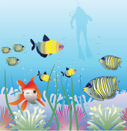 ornamental fish: underwater of tropical fishes and scuba diver Illustration