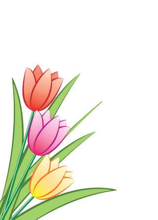 flower arrangement: bunch of tulips