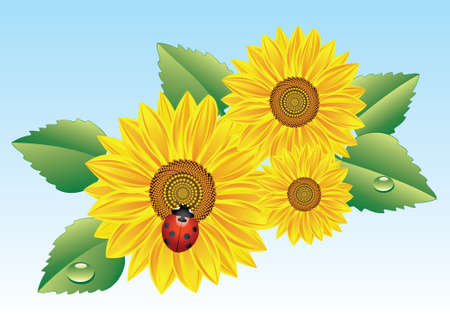 sunflowers and ladybird