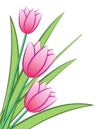 bunch of pink tulips Vector