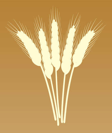 bunch of wheat ears Stock Vector - 7220669