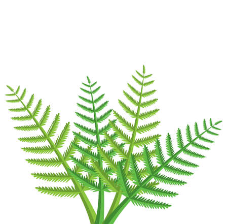 design of green fern leaves Vector