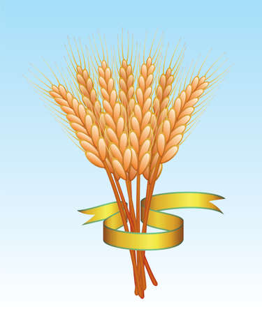 bunch of wheat ears and golden ribbon Stock Vector - 7333980