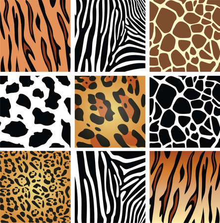 cow skin: animal skin textures of tiger, zebra, giraffe, leopard and cow