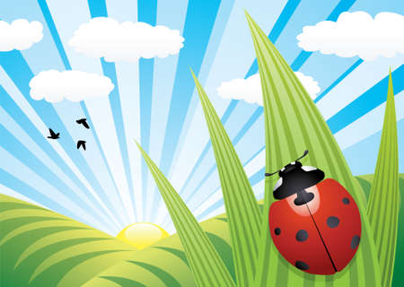 ladybug cartoon: vector ladybird on the leaf