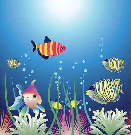 peces de acuario: Acuario y coloridos peces  Vectores