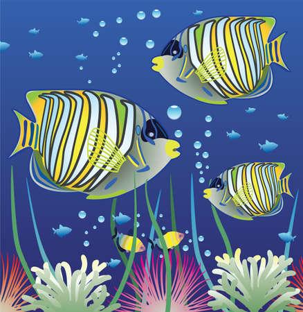 underwater light:  aquarium and colorful fishes