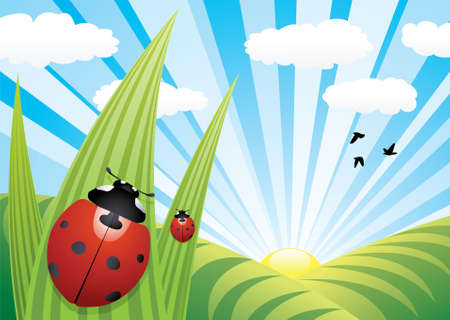 ladybirds on the leaves Vector