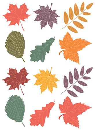 bramble: autumn leaves