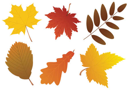 autumn leaves Stock Vector - 7782183