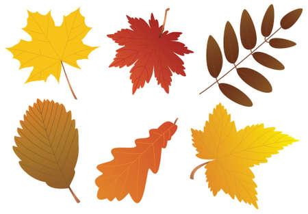 autumn leaves Stock Vector - 7782183