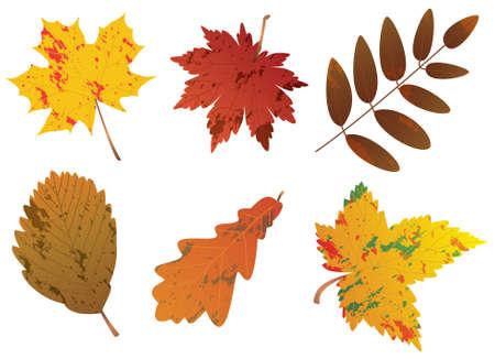 conjunto de hojas de otoñales
