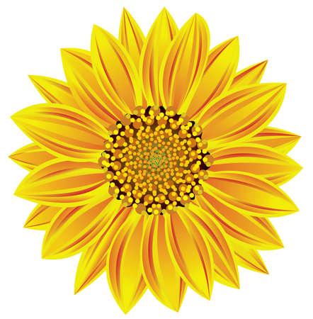 single color image:  sunflower