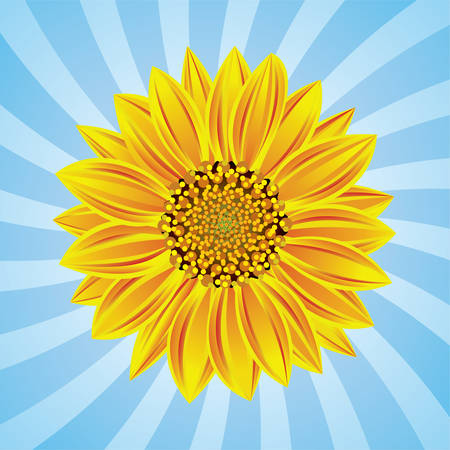 sunflower on retro background Stock Vector - 8437432