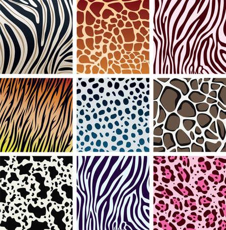 animal print:  texture della pelle animale della tigre, zebra, giraffa, leopard, vacca e cheetah Vettoriali