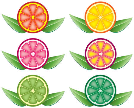 set of colorful citrus slices Vector