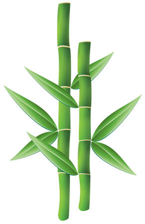green bamboo: illustration of bamboo brunches